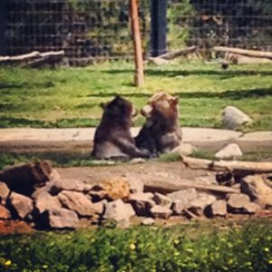 West Yellowstone Grizzly Discovery Center